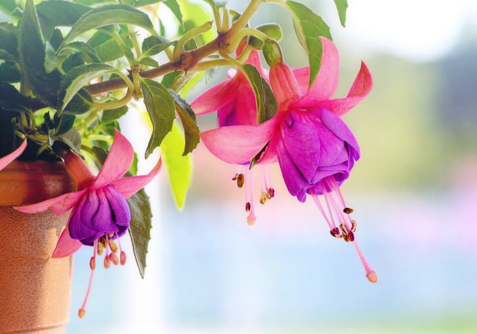 Urządzamy ogród - jak zadbać o kwiaty