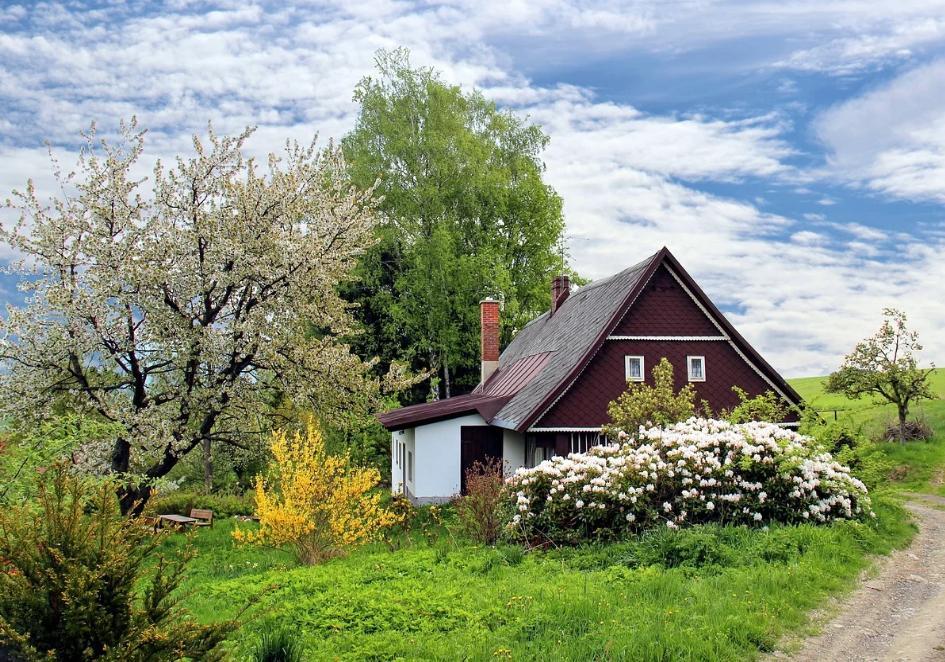 dom, ogród, drzewa